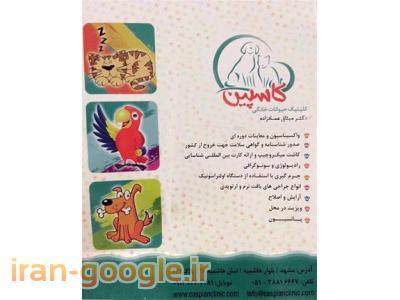 کلینیک دامپزشکی در مشهد  ، مرکز جراحی و کلینیک دامپزشکی کاسپین