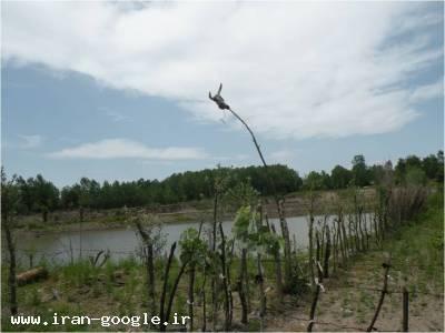 فروش  ویژه یک قطعه زمین 12000 متری در کنار حاشیه زیبای سپید رودفروش فوری استخر ماهی گرمابی در شمال