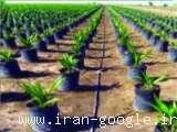 فروش بذر و کود ، فروش لوازم آبیاری ، فروش لوازم باغبانی ، فروش لوازم سمپاشی ، شرکت کشاورزی آریا