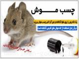 چسب موش گیر بهترین روش گرفتن موش( فروشگاه جهان خرید)