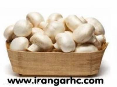 مواد اولیه وتجهیزات سالن های پرورش قارچ