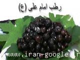 فروش رطب امام علی (ع) ، پخش و عرضه رطب و خرما