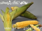 اولین و بزرگترین مجتمع تولید وتوزیع ظروف یکبار مصرف گیاهی