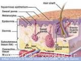 آموزش تخصصی مراقبت های پوست و مو