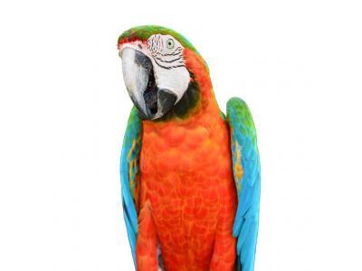 صادرات و واردات حیوانات خاص