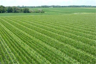 فروش استثنایی باغ و زمین زراعی با آب و برق
