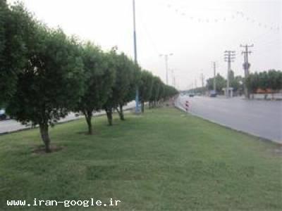 فروش درخت کنوکارپوس