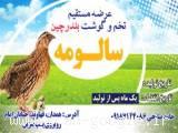 فروش گوشت و تخم بلدرچین در استان همدان