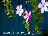 فروش گلهای مصنوعی زیرقیمت