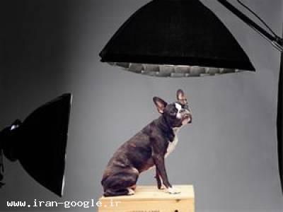 عکس از حیوانات آتلیه تصویر نگار ایران
