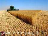 زمین کشاورزی جهت اجاره