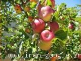 هرس درختان میوه و غیر میوه