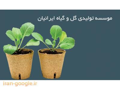 تولید نشاء فصلی خارجی ، طراحی و اجرا فضای سبز