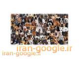 تخصصی ترین مرکز پرورش و فروش  سگ گارد شکاری