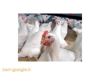 فروش مرغداری گوشتی  با سند تک برگ و وام کشاورزی در رشت