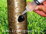 اولین کودمایع (11 عنصر) با تزریق مستقیم به تنه درخت با صرفه بدون هدر رفت