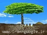 تزریق کود به ریشه درخت
