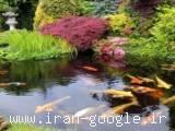 آبنما باغ ژاپنی