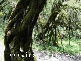 تور جنگل الیمستان یک روزه