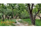 400 متر باغچه در ملارد