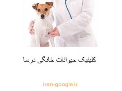 کلینیک تخصصی حیوانات خانگی در محدوده شهرک غرب