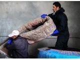قالیشویی و رفوگری کاردان