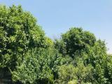 باغ 1500 متری با سند شش دانگ در ملارد
