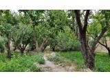 1000 متر باغ در بهترین موقعیت شهریار